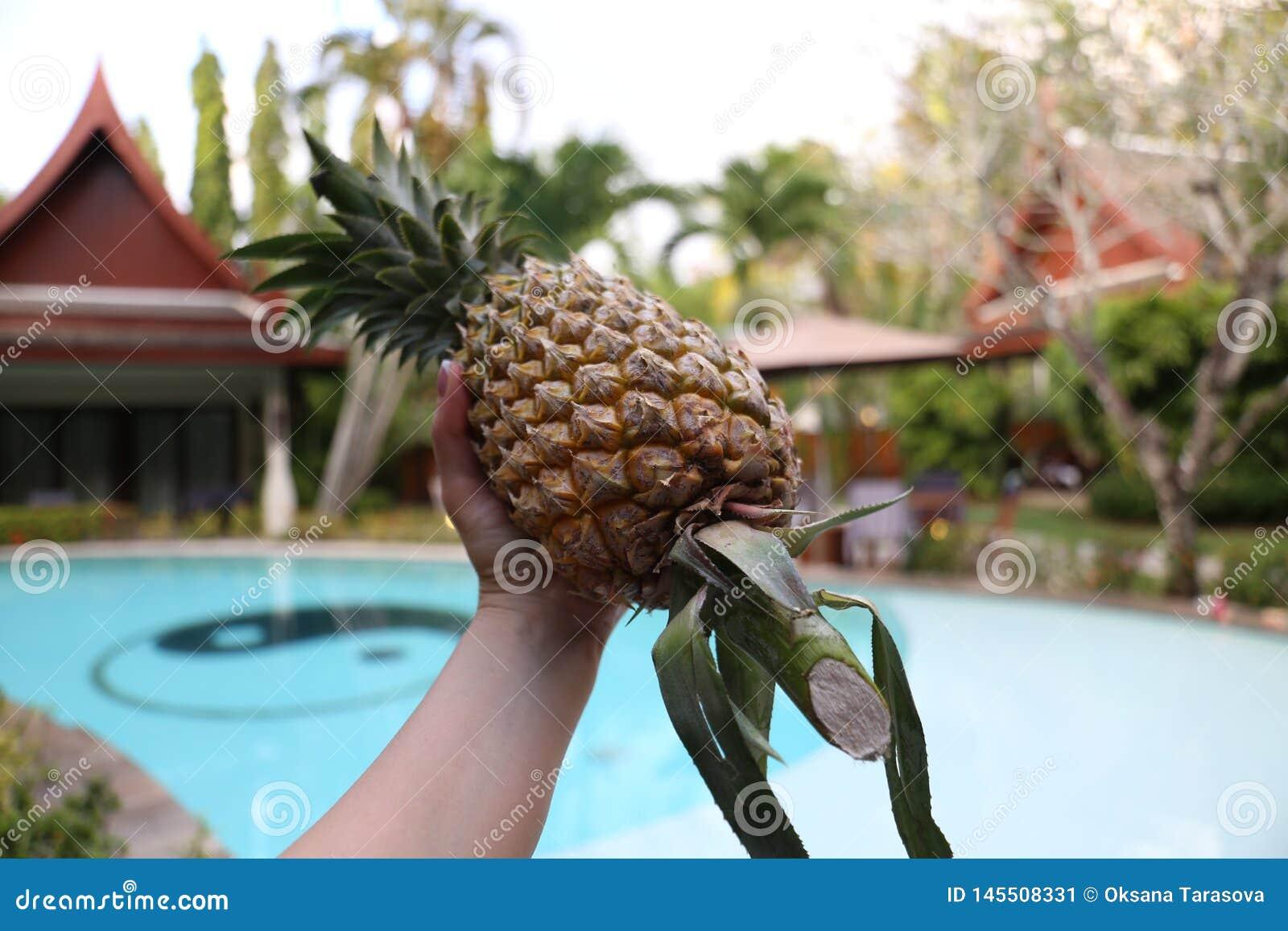Seet菠萝在温暖的泰国