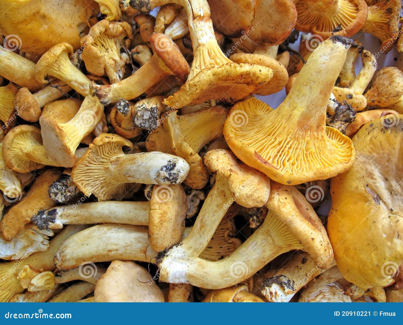 production de champignons comestibles pdf