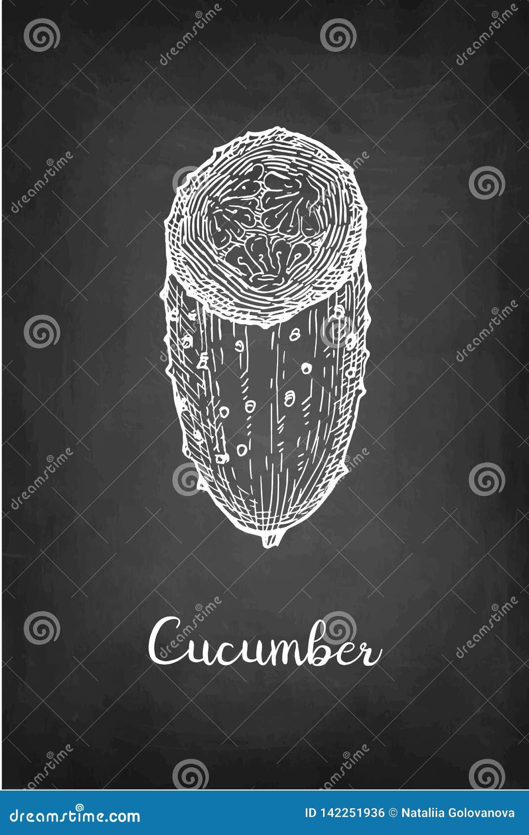 Segni lo schizzo col gesso del cetriolo