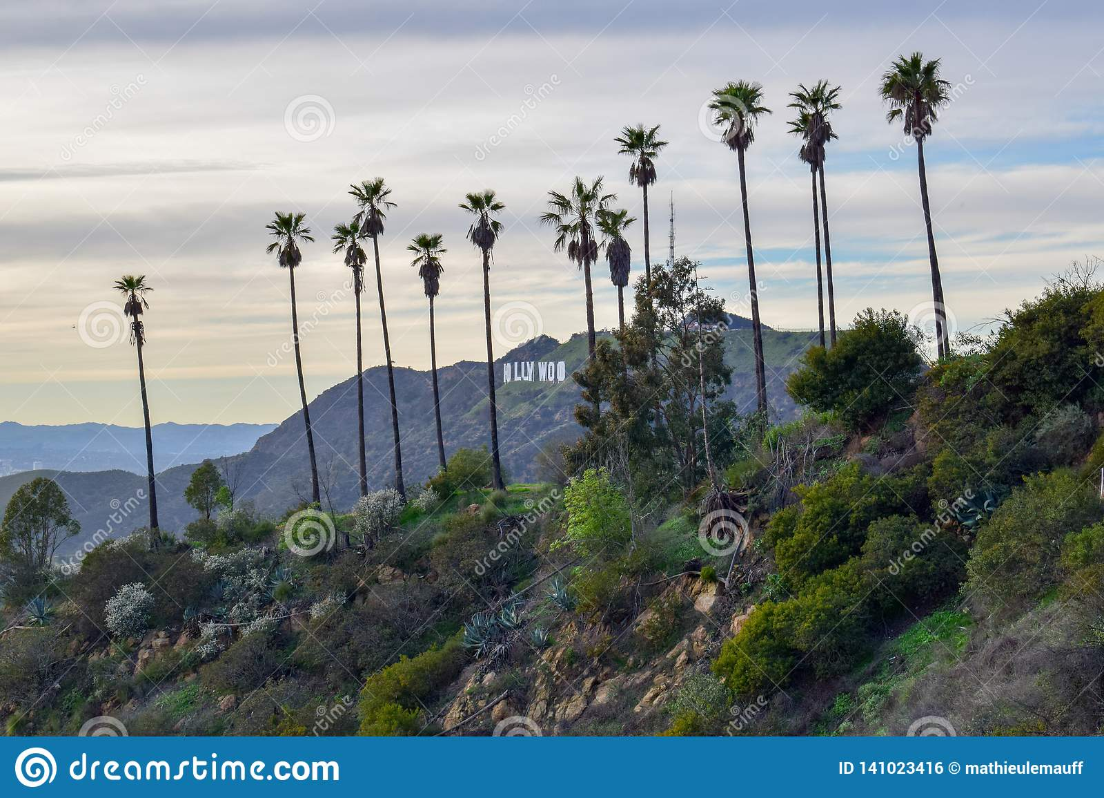 Segno di Hollywood circondato con le palme sul supporto Hollywood al tramonto