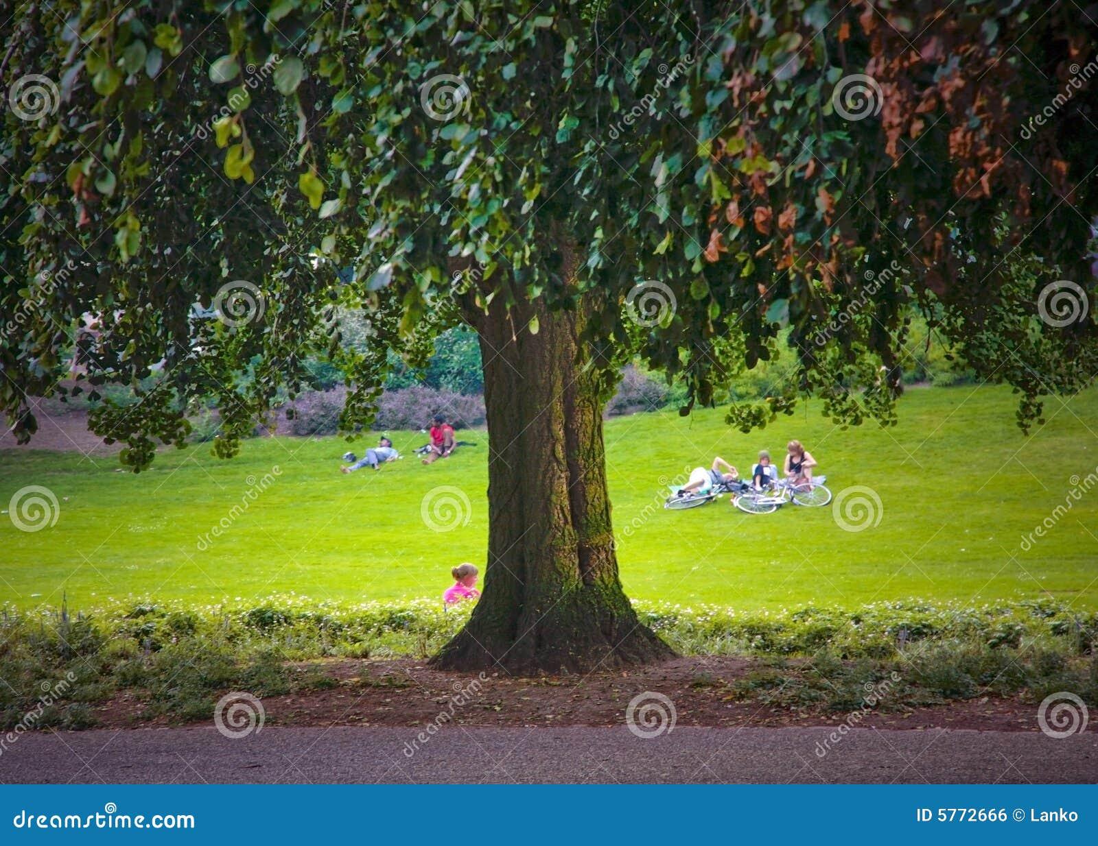 Sehr großer alter Baum