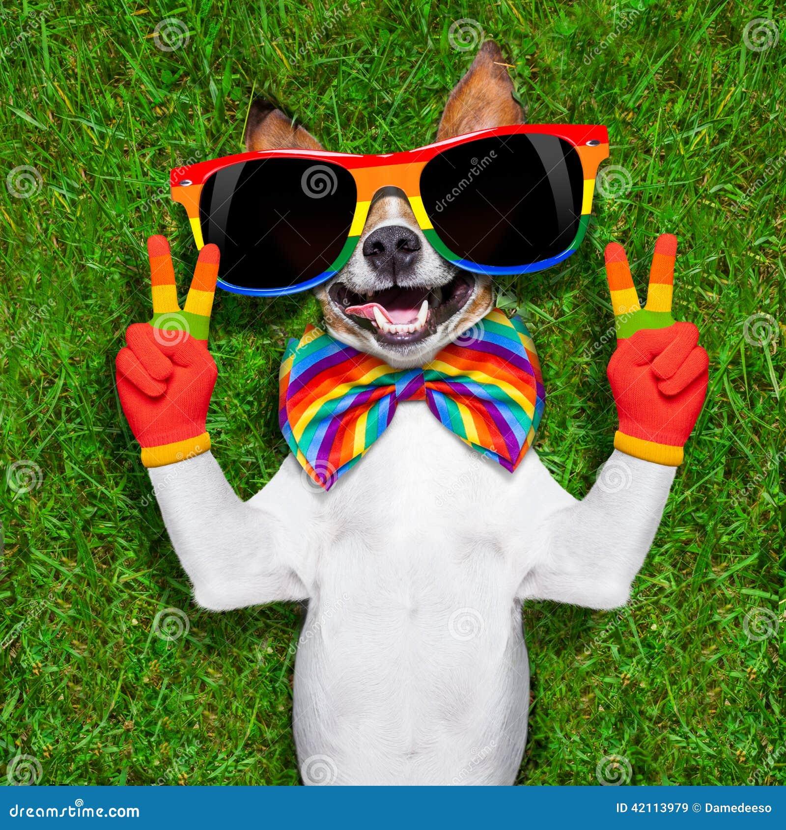 Sehr lustiger homosexueller Hund