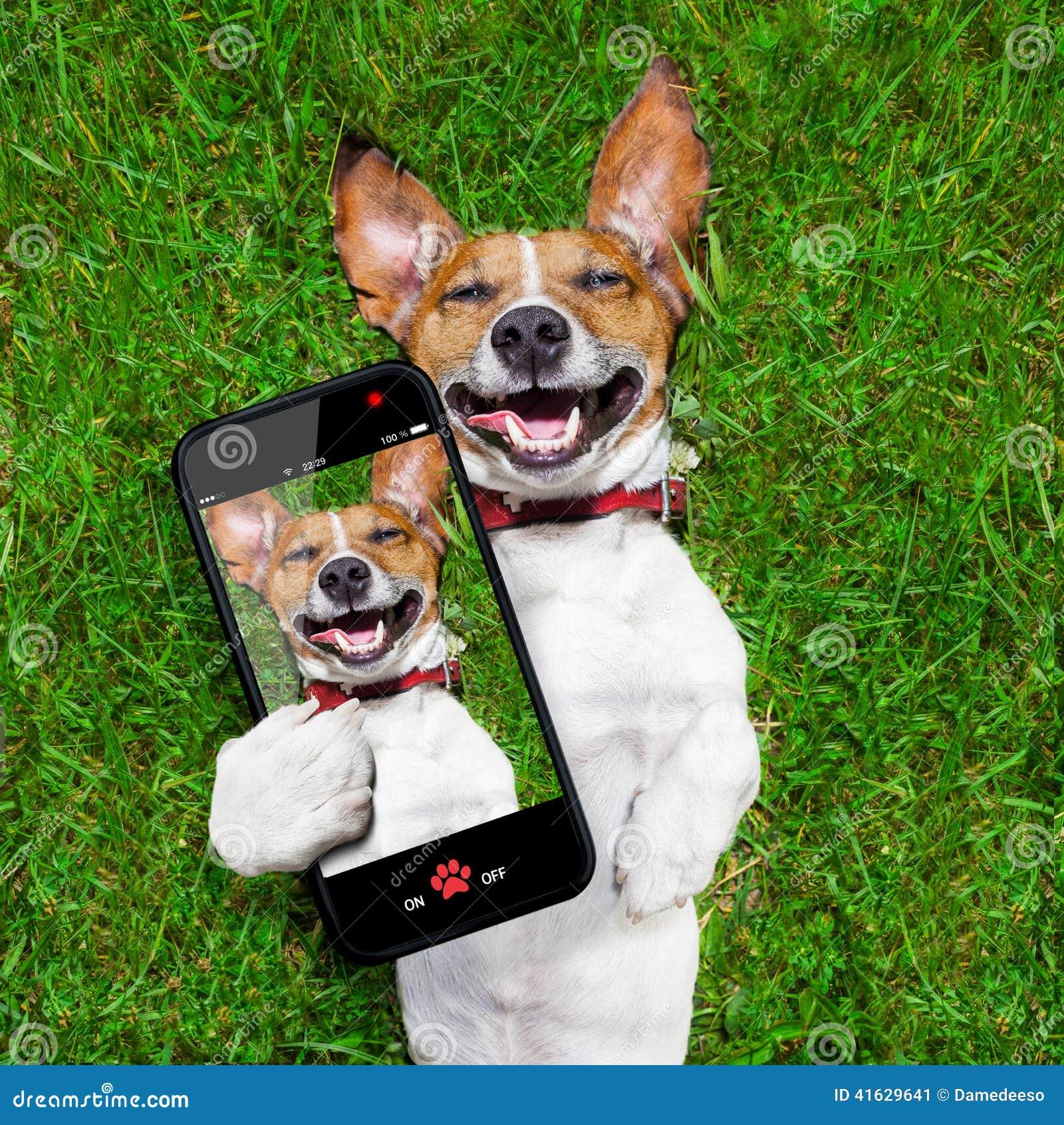 Sehr lustiger Hund