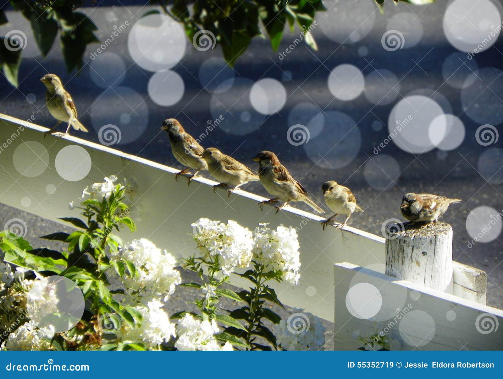 Sei uccellini Bokeh