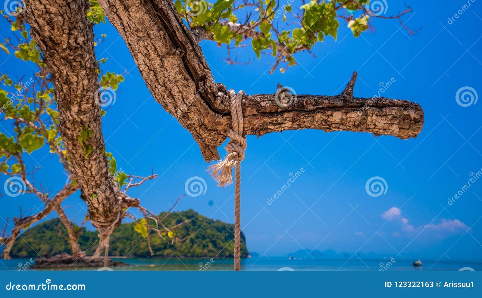Seil-Schwingen auf Baum mit Seeansicht