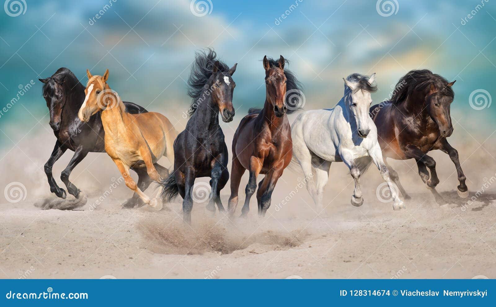Seis caballos funcionados con en desierto arenoso