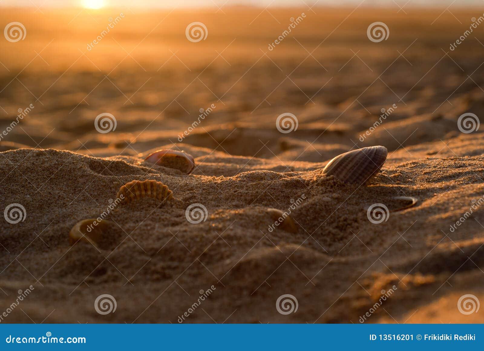 Seis seashells en la arena de oro