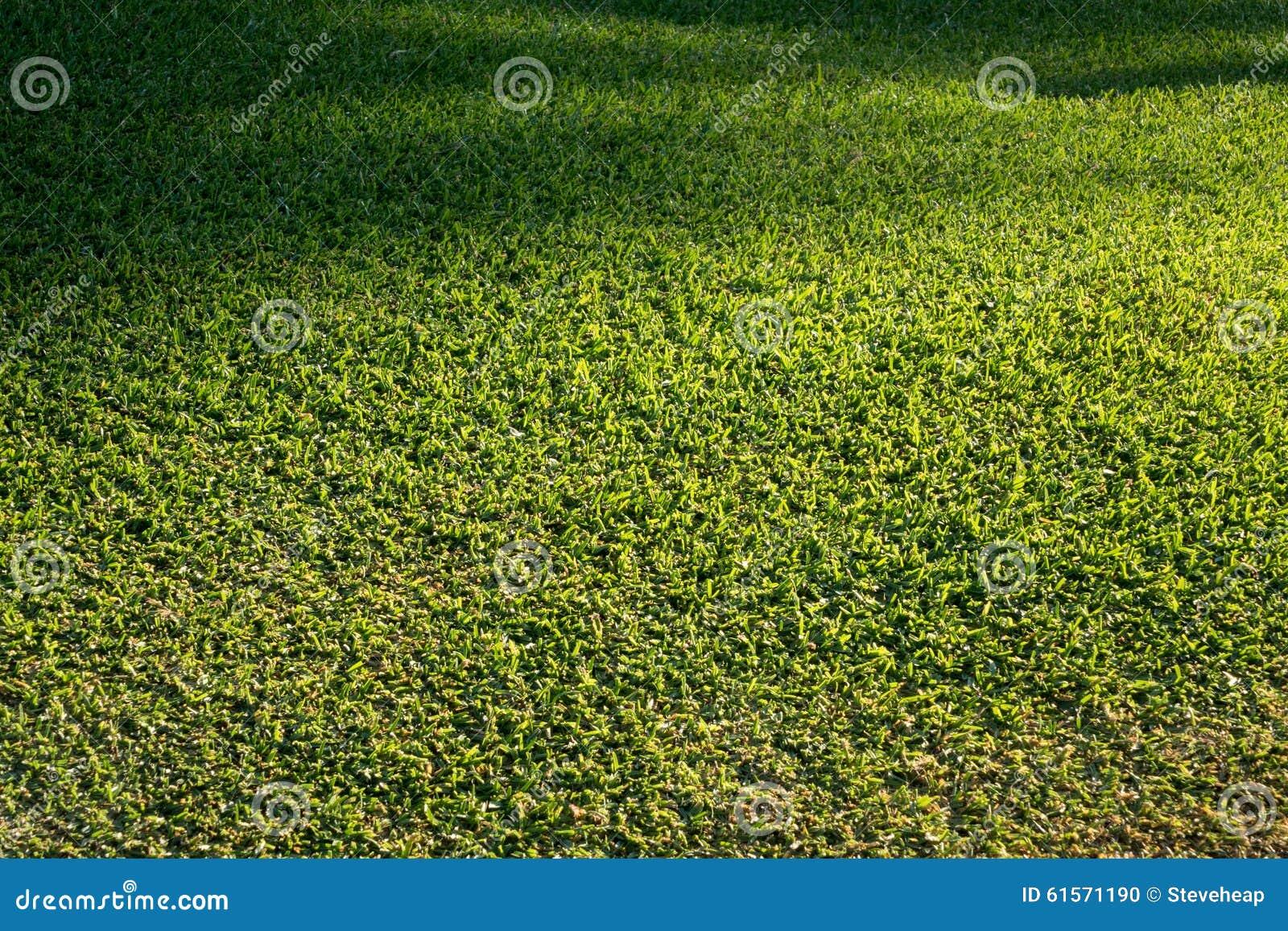 Seitenansicht des eben gemähten Grasrasens