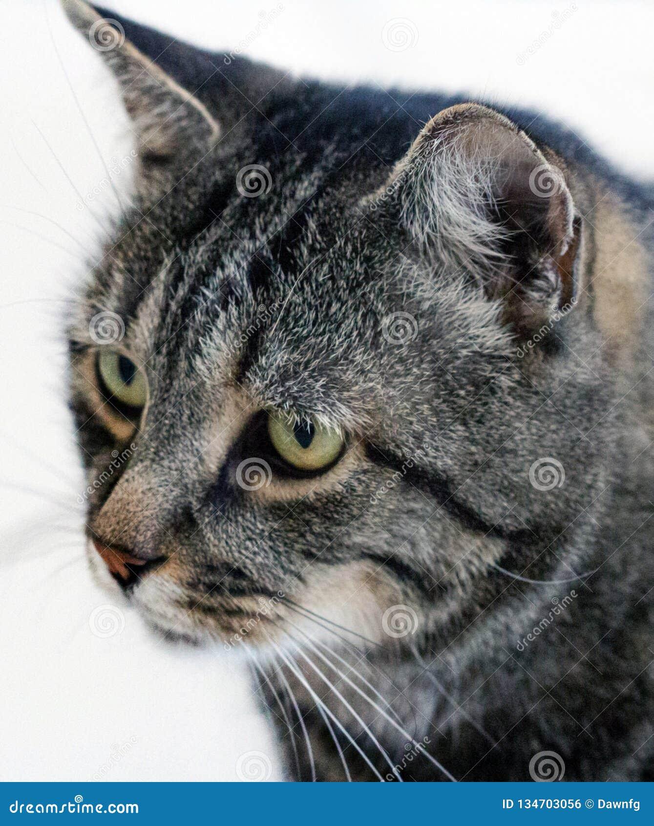 SEITENporträt VON STRIPEY GREY CAT