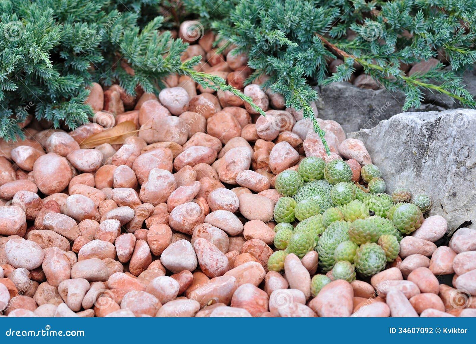 venda de seixos para jardim:Seixos E Plantas No Jardim Ornamental Fotografia de Stock – Imagem