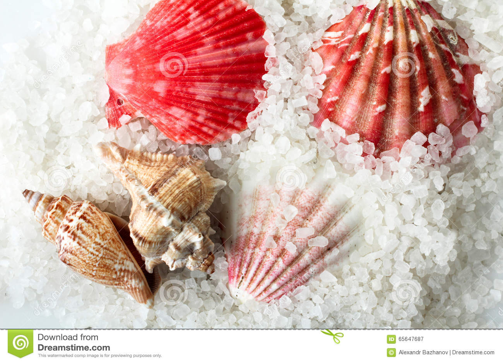 Sel et coquillages de mer