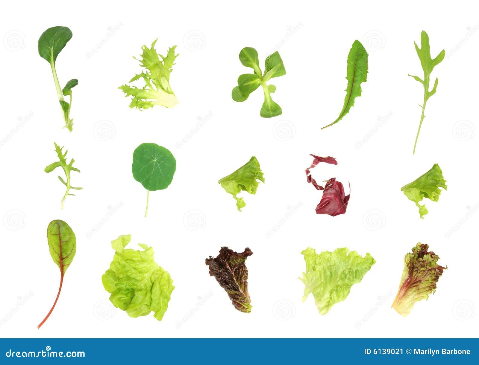 Selección de la hoja de la ensalada