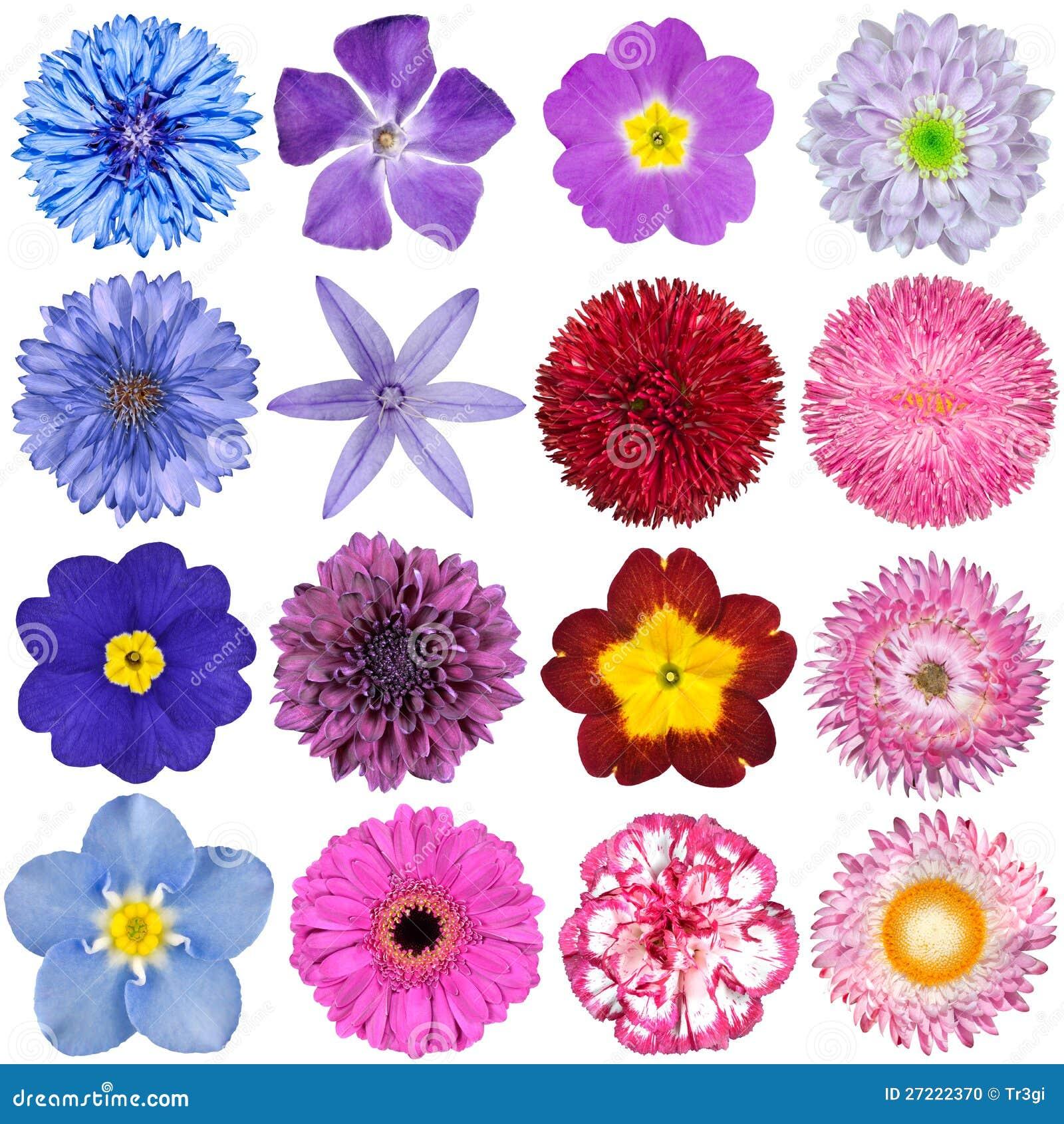 Selección grande de flores coloridas aisladas