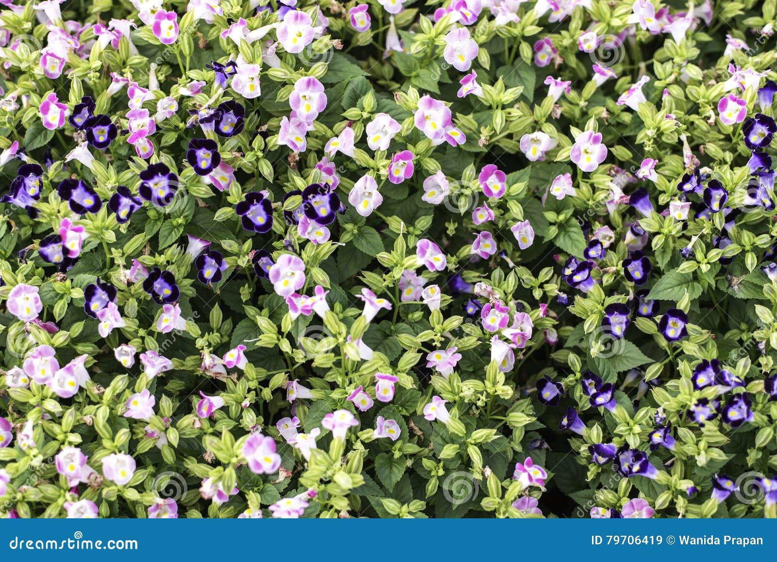 Selecteer nadrukbloemen van struik roze bloemen,