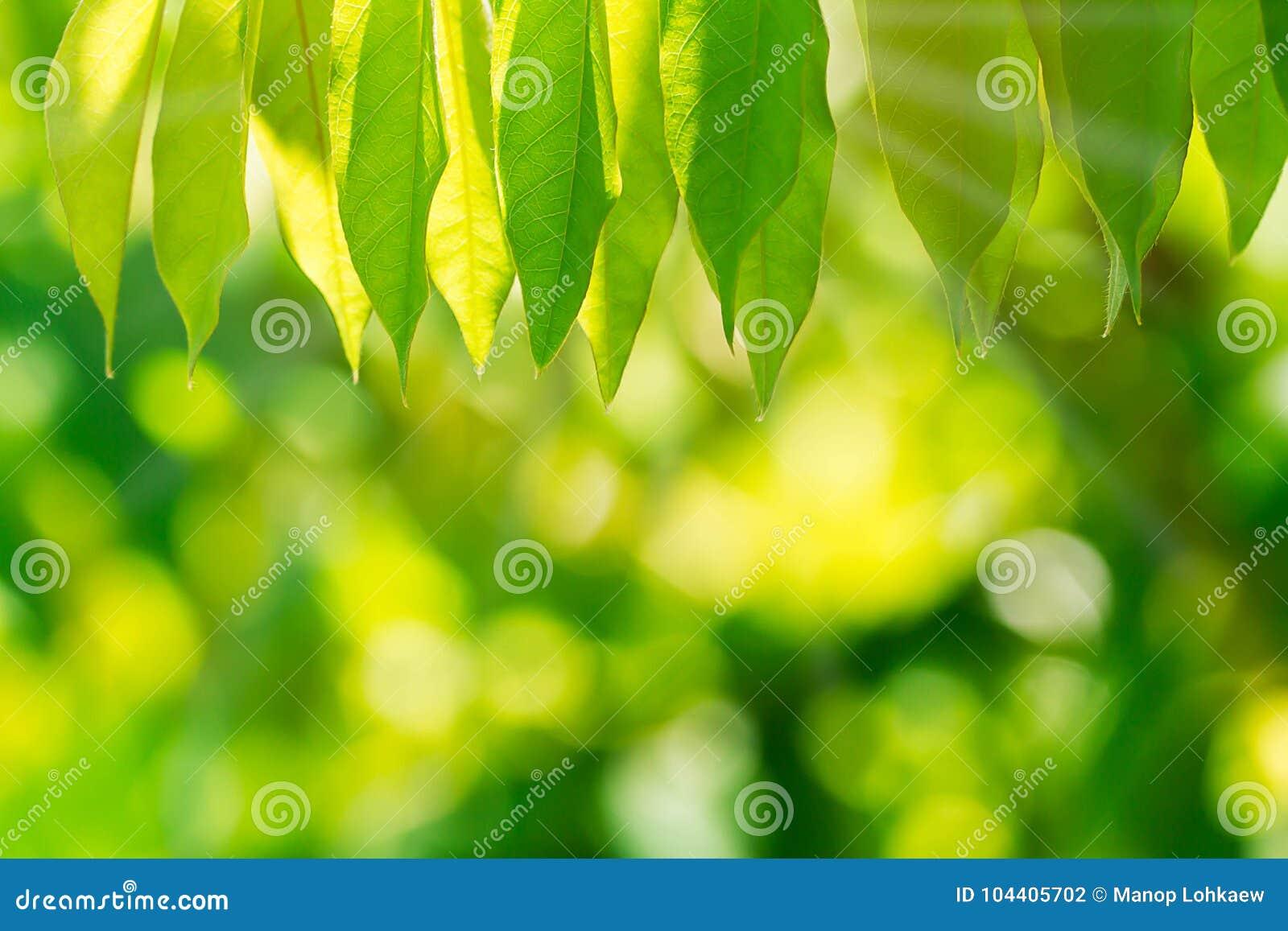 Selectieve nadruk van aard groene bladeren op vage groene bokehachtergrond