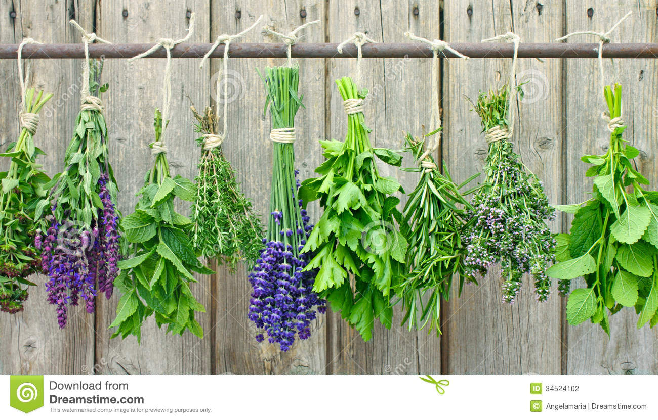 Selection of different fresh herbs