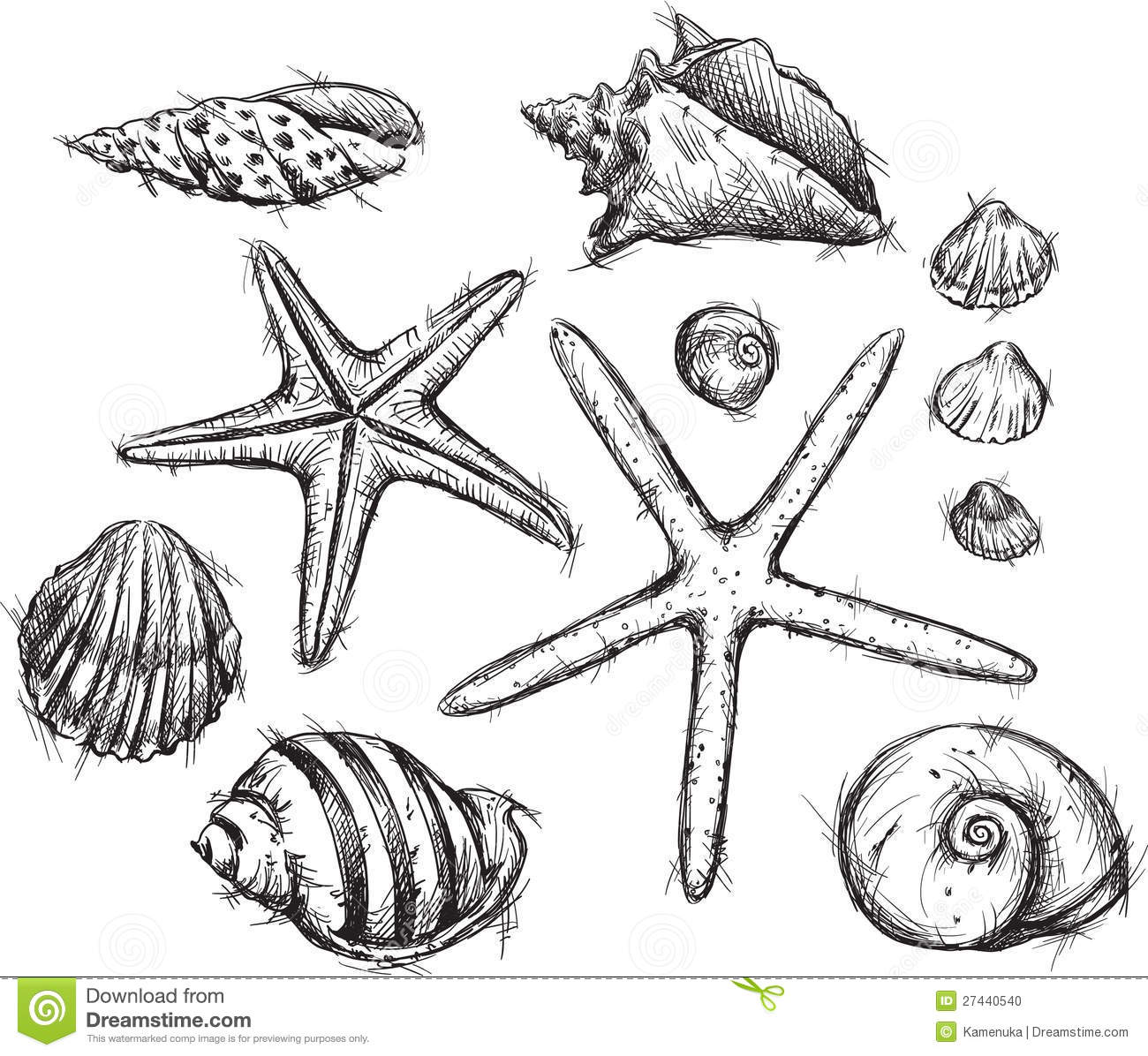 sea shells coloring pages virtren com