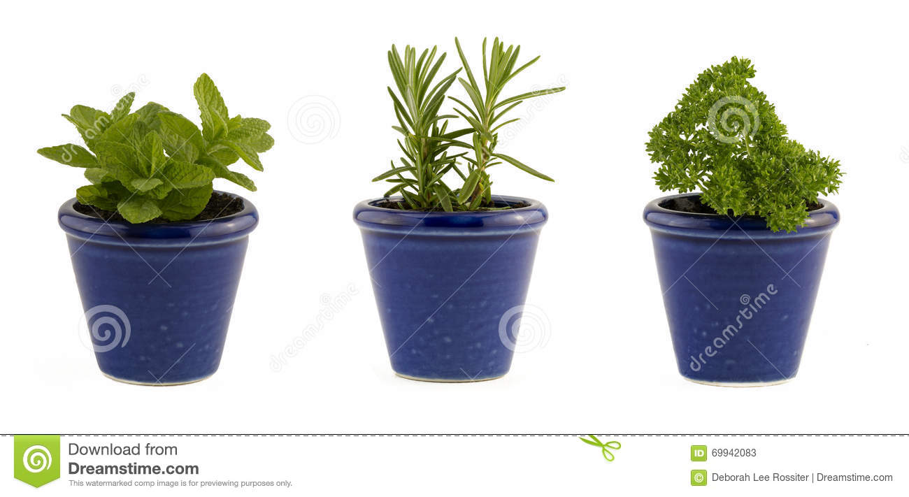 Selection Of Three Herbs Mint Rosemary And Parsley In