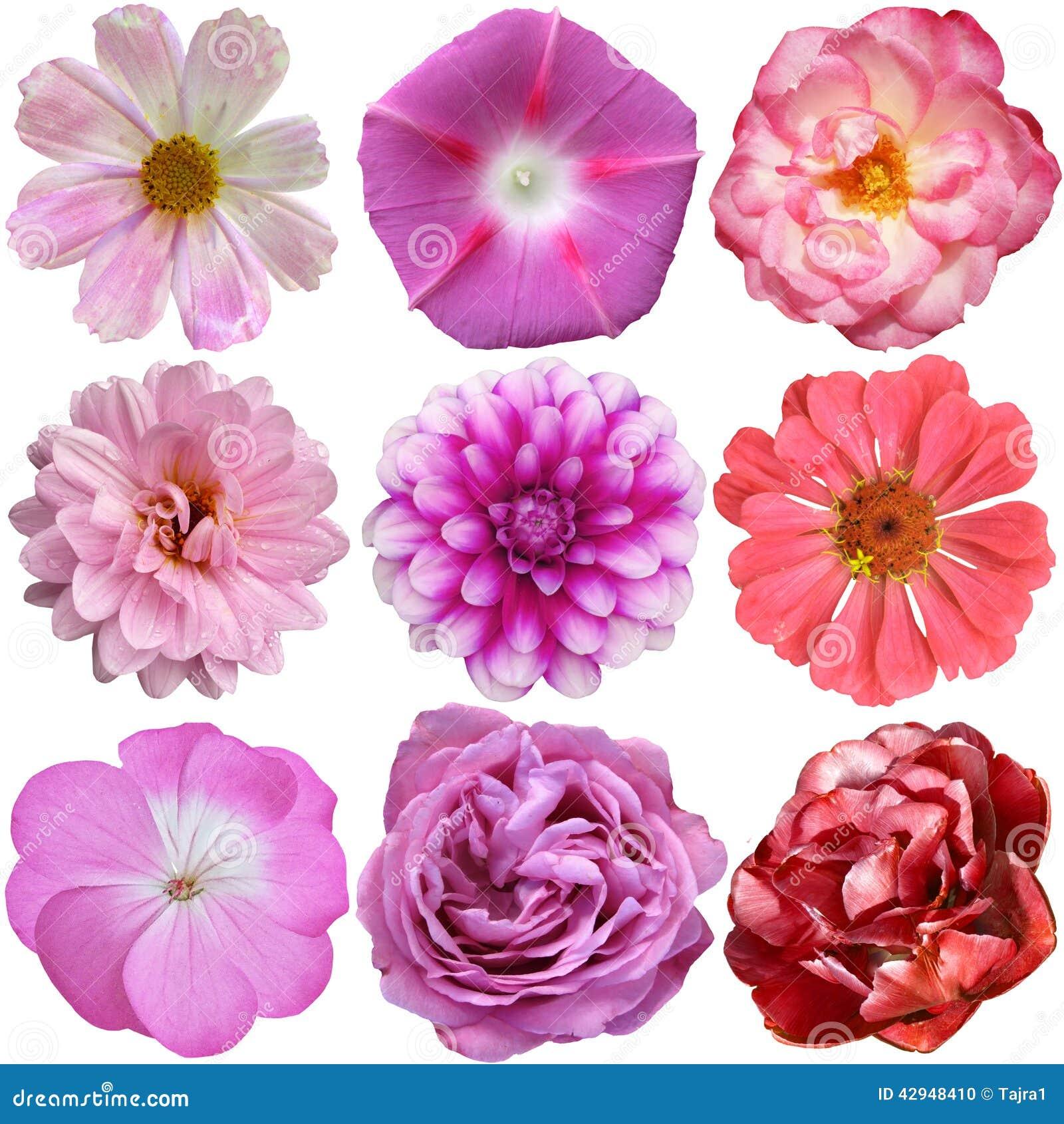 Photos of various flowers 50 Amazing Flower Photographs - ProFlowers Blog