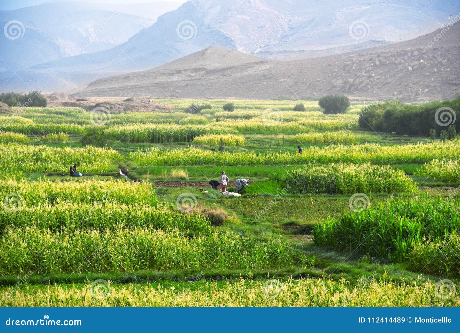 Self-sufficient Labor-intensive Farming In Morocco Stock