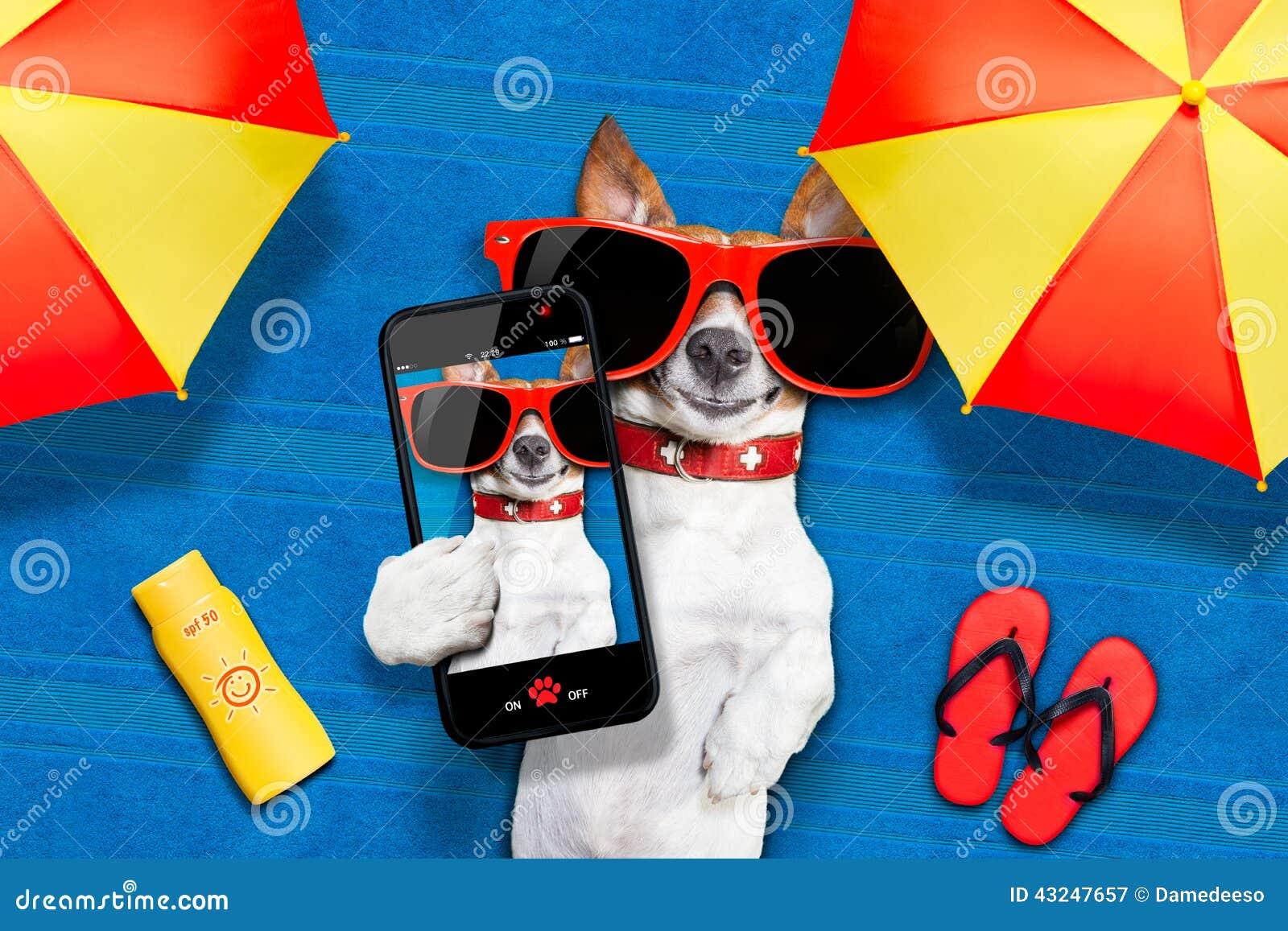 Selfie da praia do verão do cão