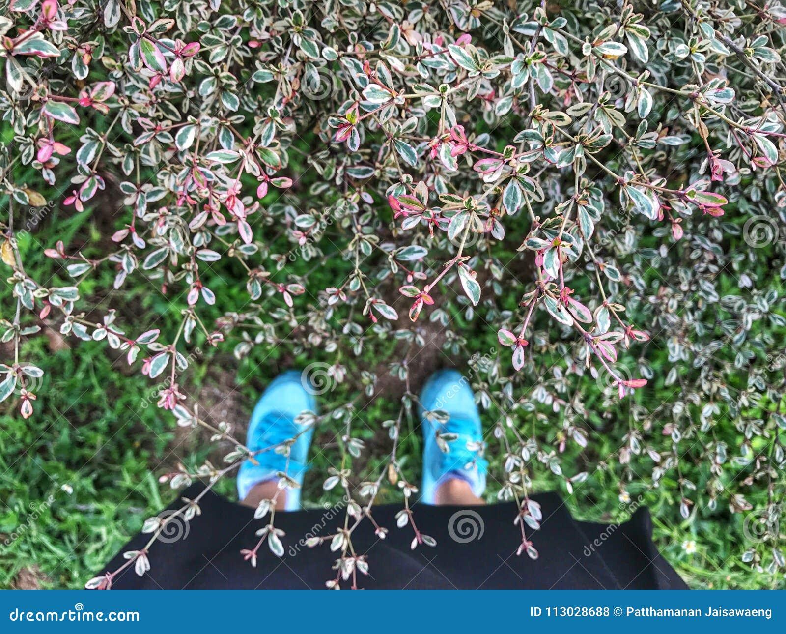 Selfie de pies y la zapatilla de deporte se colocan en fondo de la hierba verde