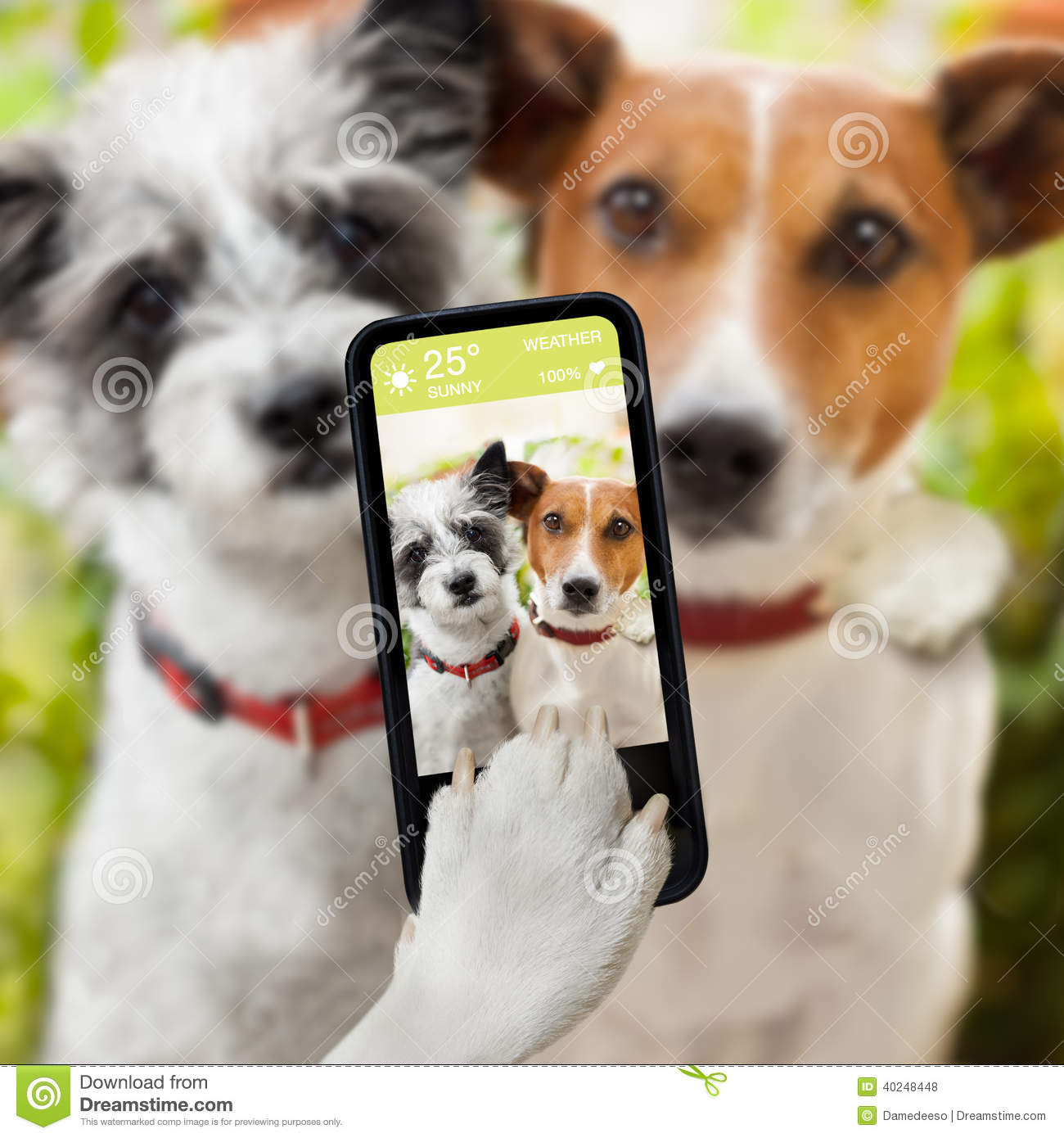 Couple of dog taking a selfie together with a smartphone. Smiling Dog And Cat