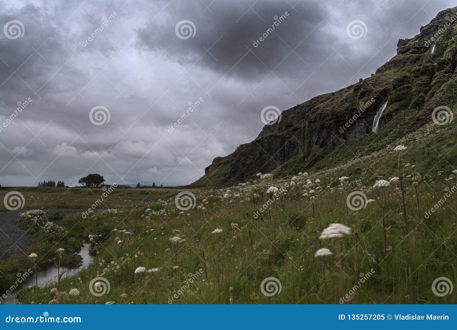 Seljalandsfoss en été, Islande