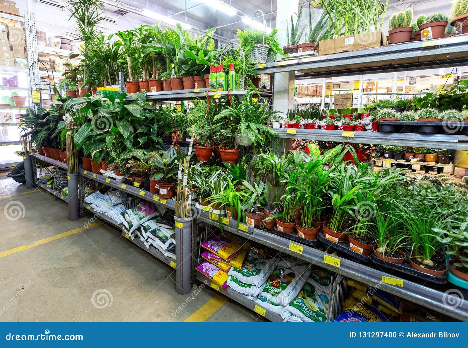 Pot De Graisse Castorama selling potted plants and flowers editorial image - image of