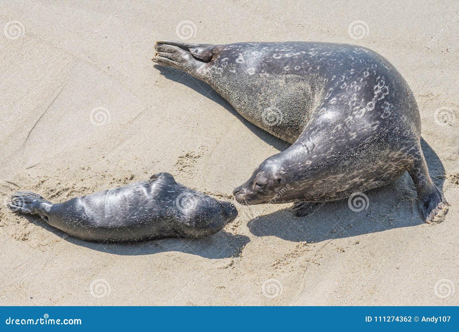 Sello de la madre y del perrito en la playa