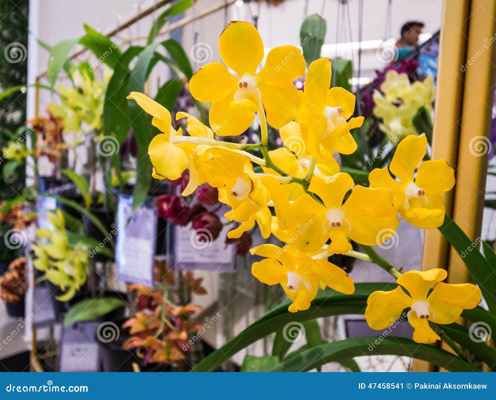 seltene gelbe orchideen redaktionelles foto bild 47458541. Black Bedroom Furniture Sets. Home Design Ideas