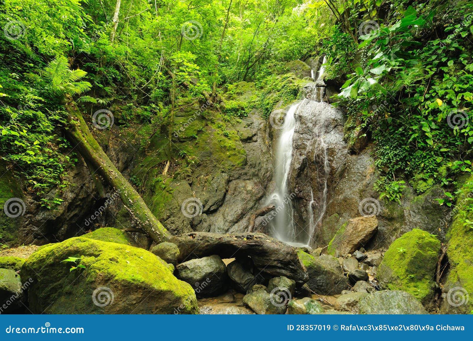 Selva colombiana salvaje de Darien