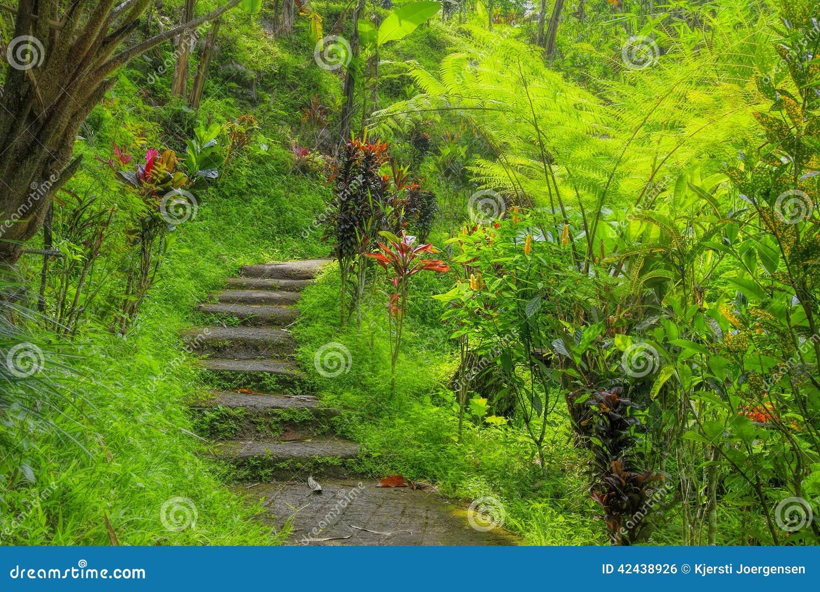 Selva del Balinese