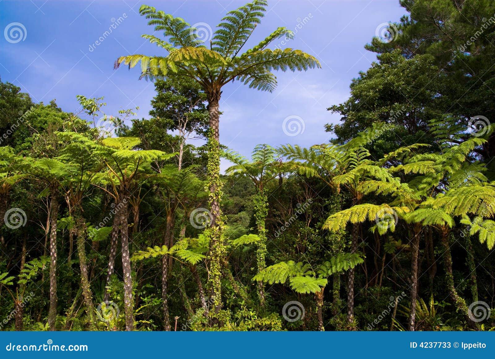 Selva do lepifera do cyathea