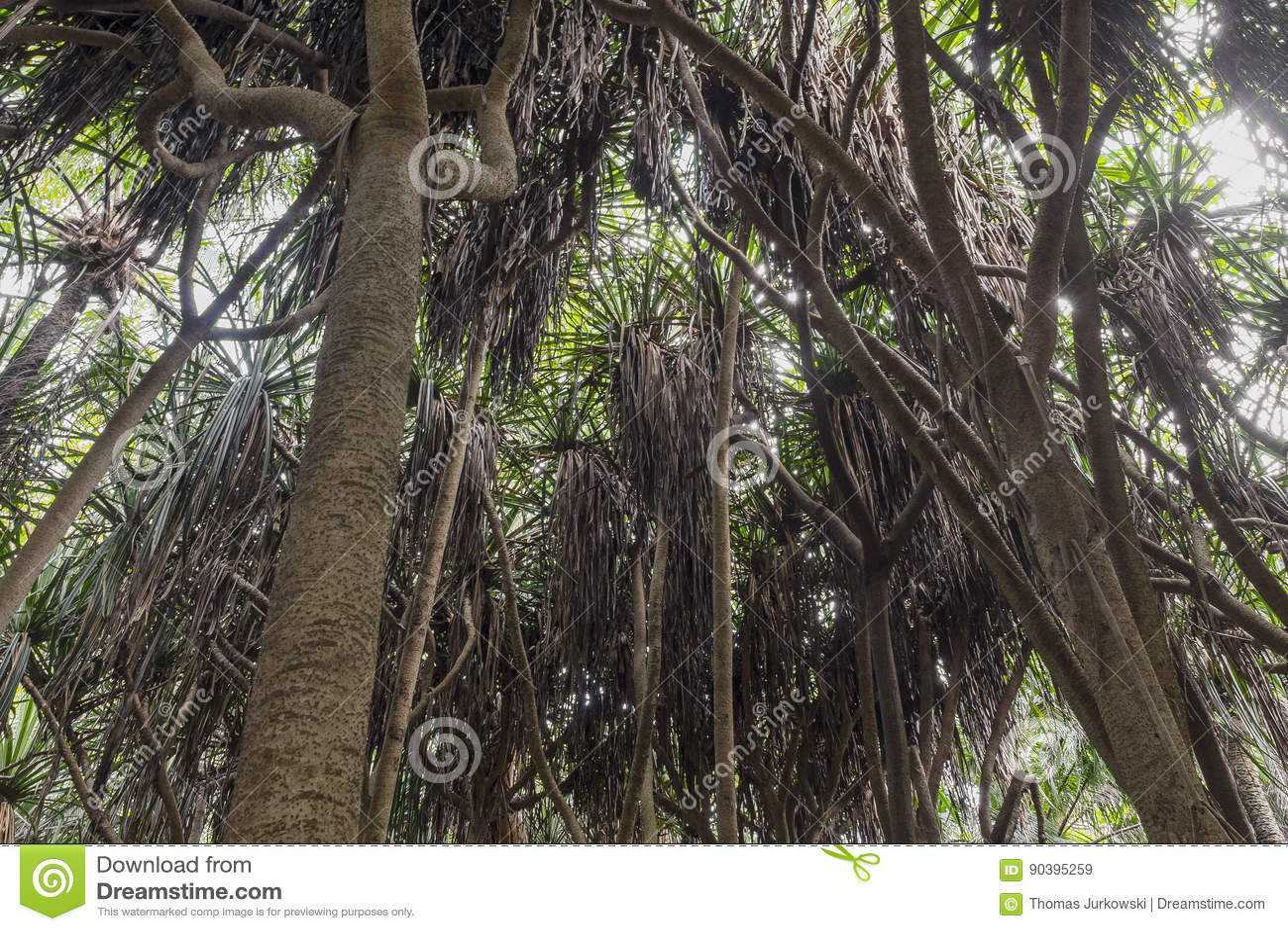 Selva em Zanzibar