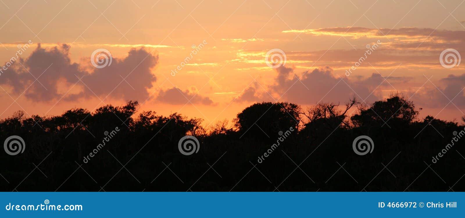 Selva Treeline
