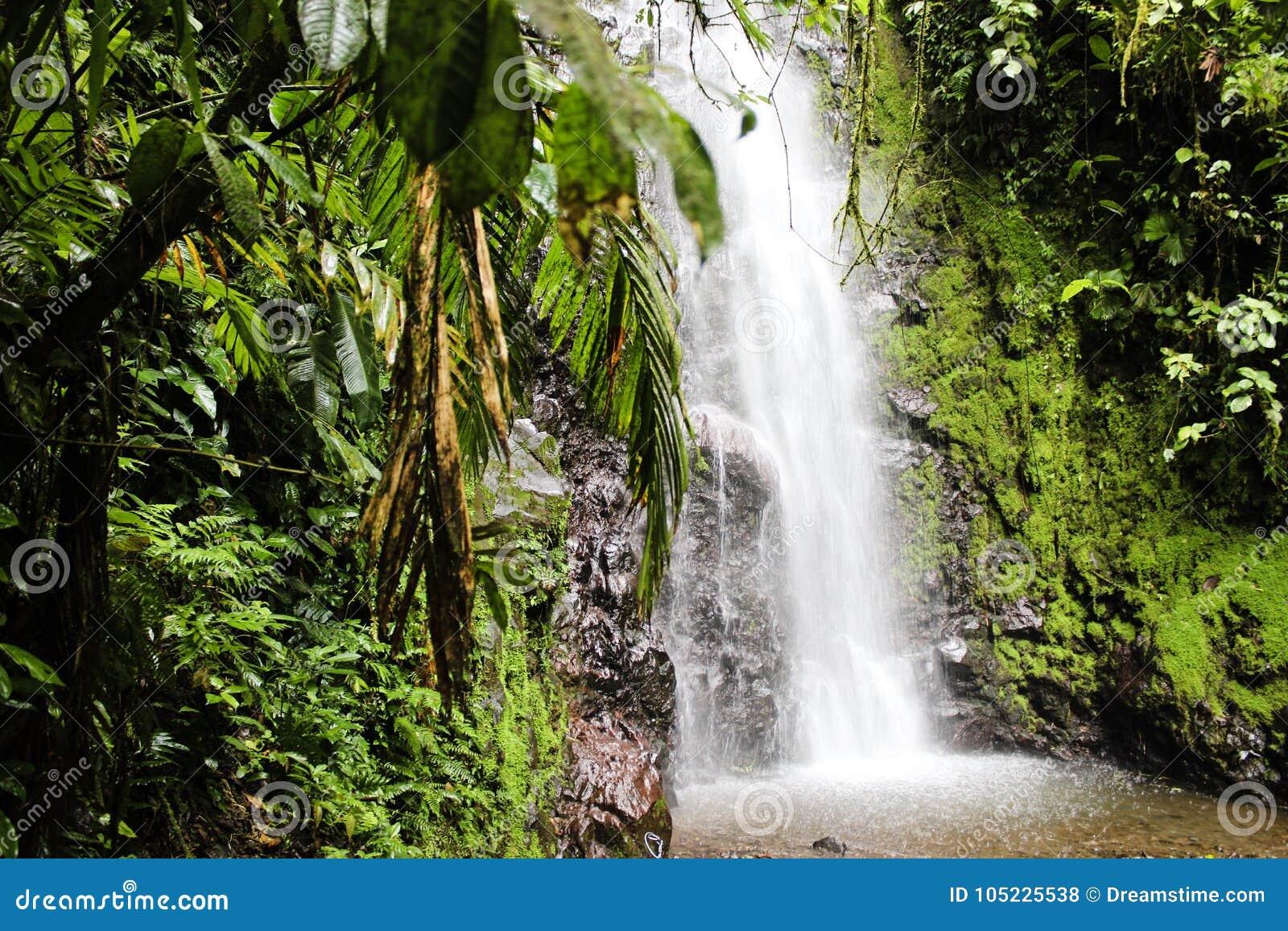 Selva tropical tropical Costa Rica de la cascada