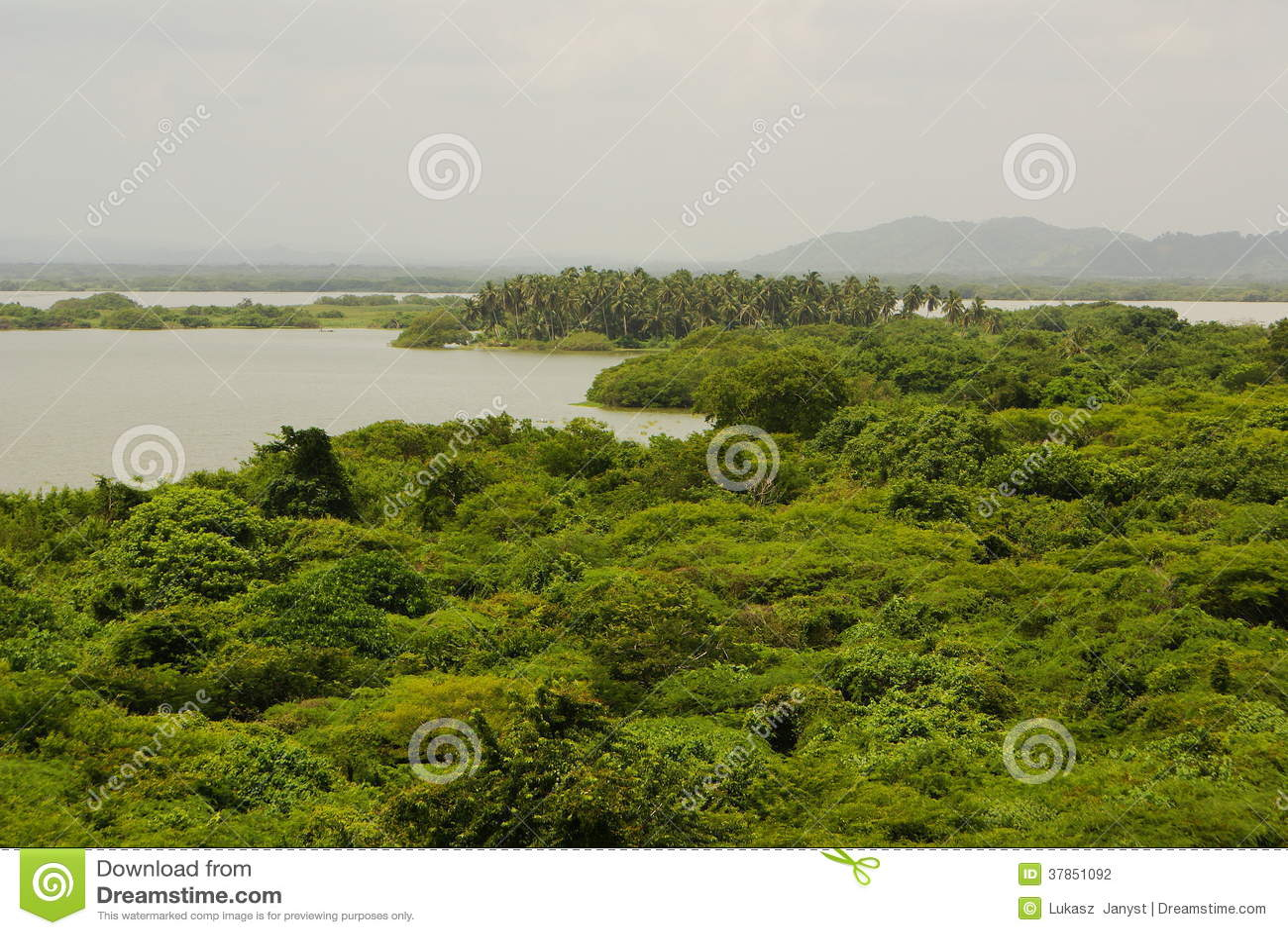 Selva tropical duplicada en aguas, en Rio Negro en el lavabo del río Amazonas, el Brasil, Suramérica