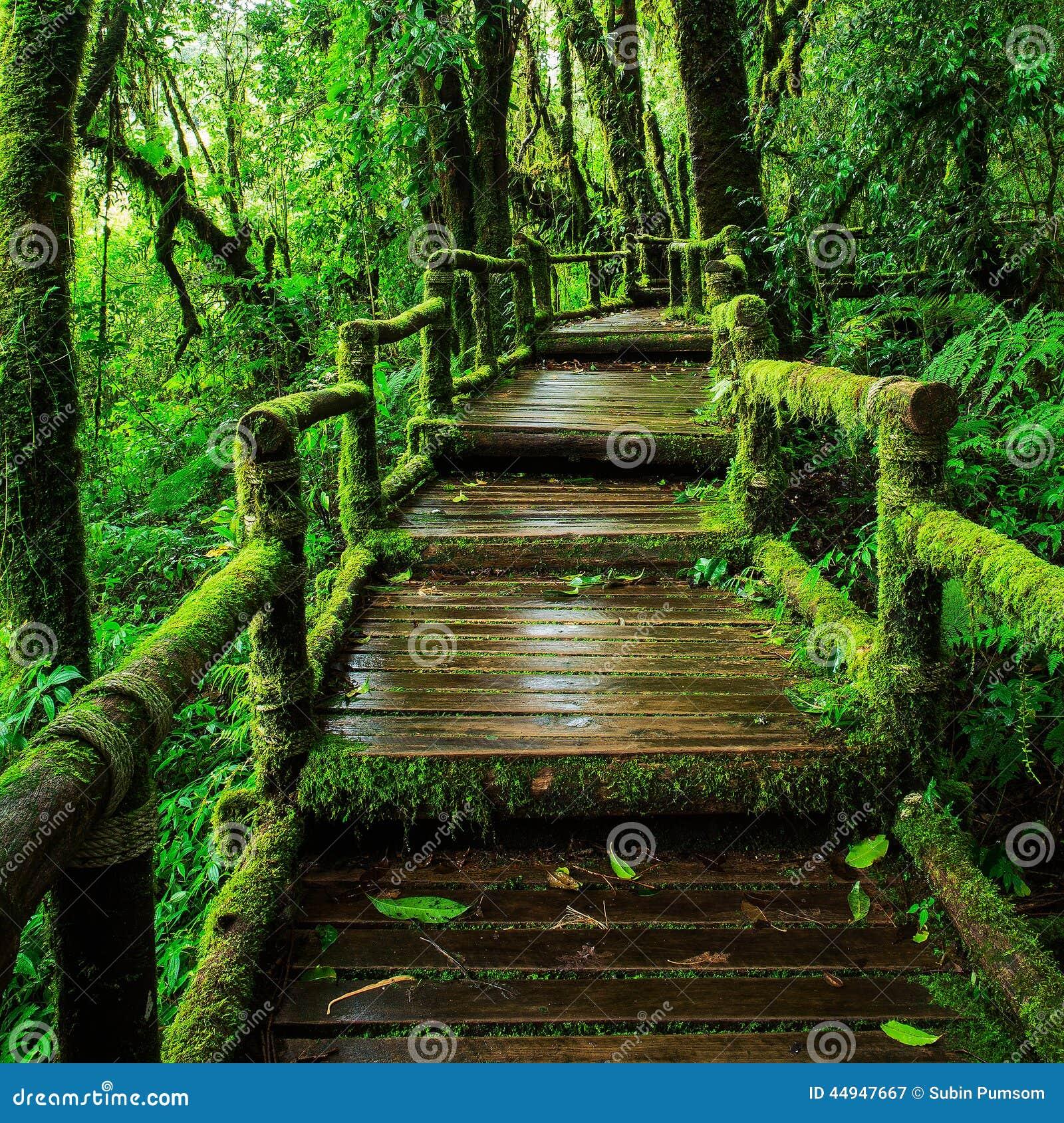 Selva tropical hermosa en el sendero de ka del ANG
