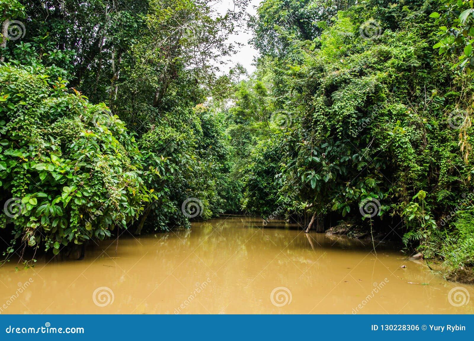 Selva tropical a lo largo del río kinabatangan, Sabah, Borneo Malaysi