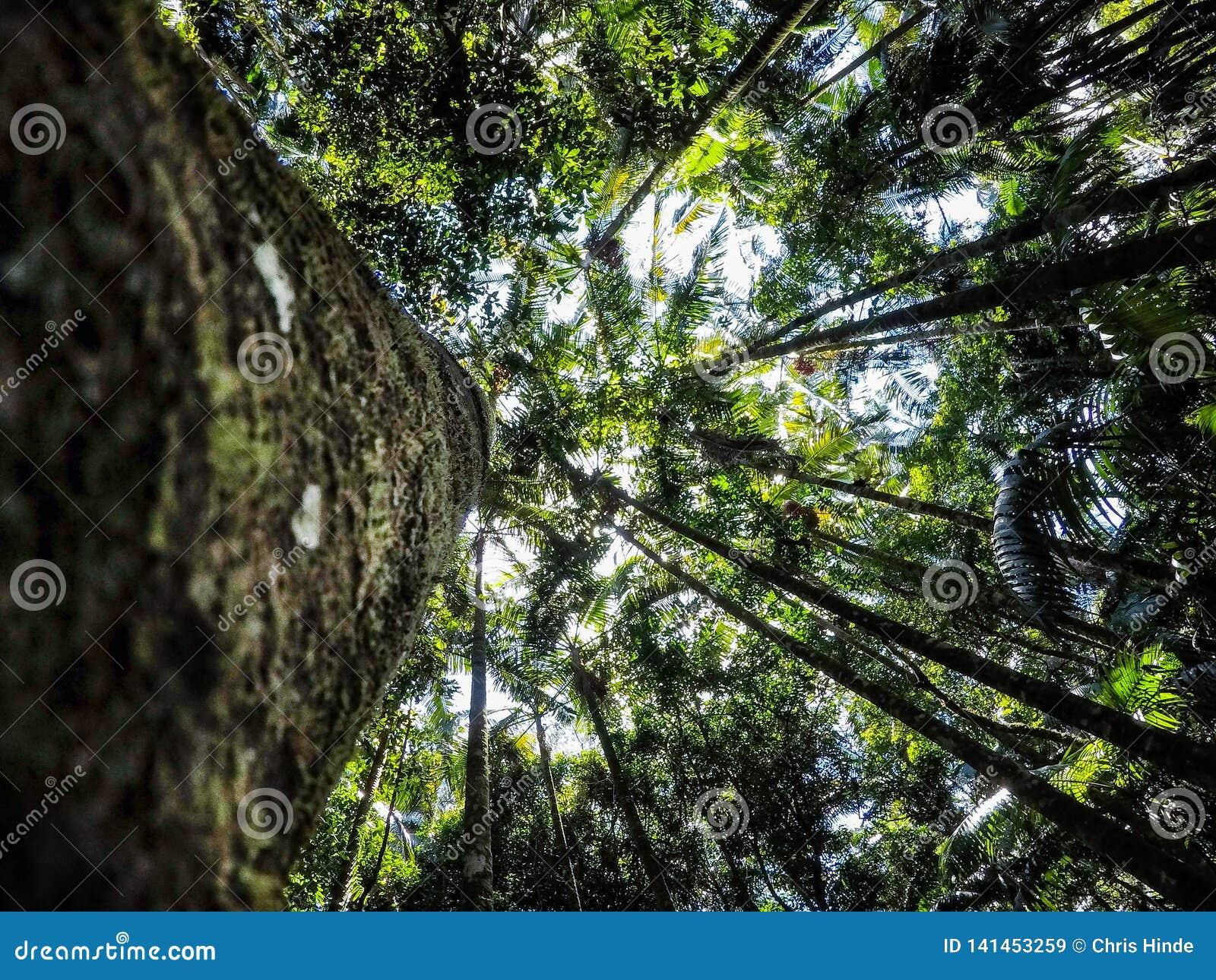 Selva tropical que mira para arriba