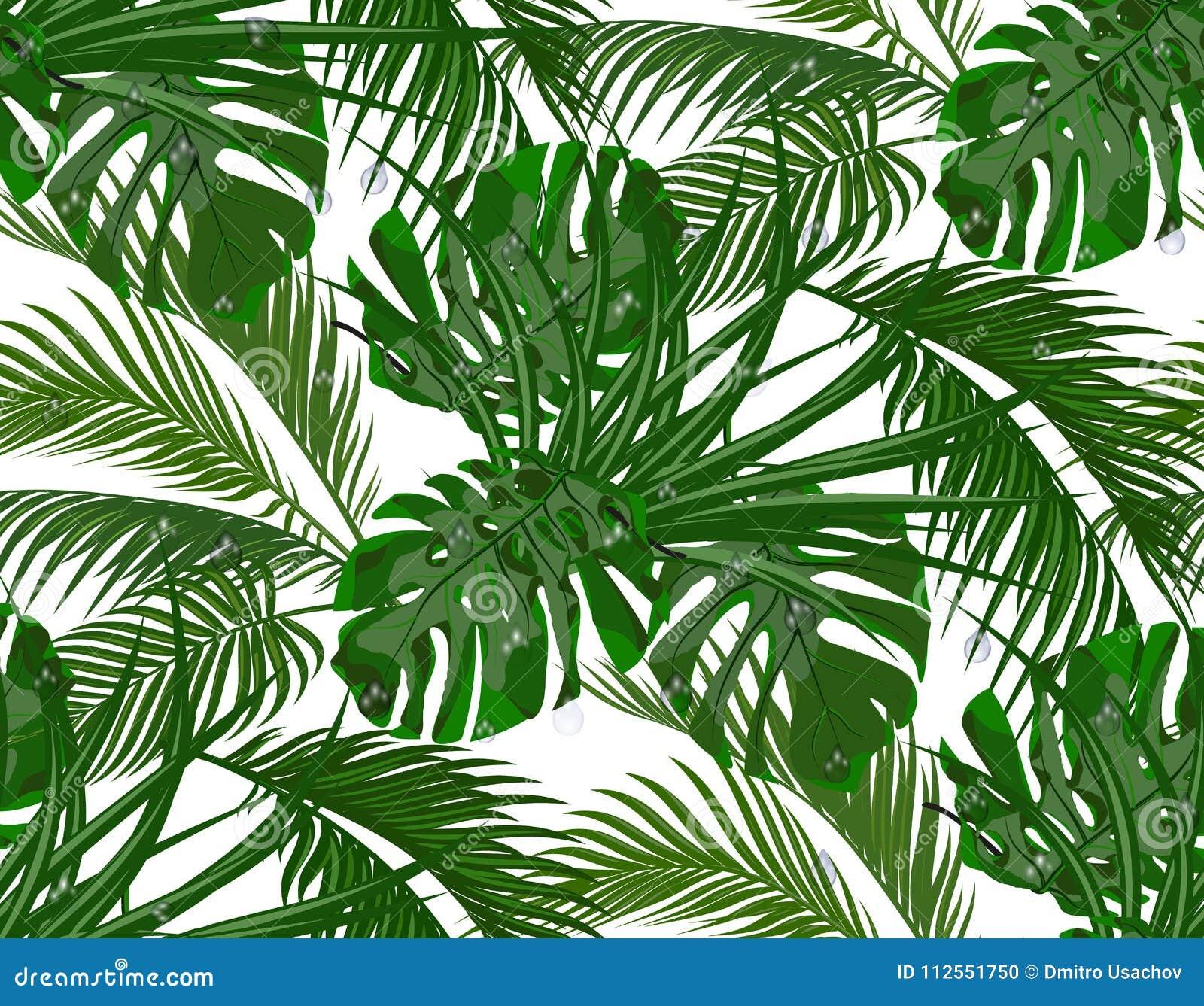 Selva Verde da luxúria folhas de palmeiras tropicais, monstera, agaves seamless Isolado no fundo branco