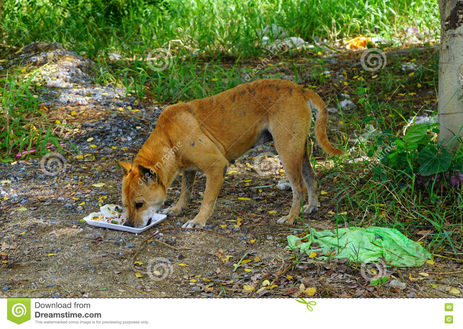Sem abrigo com fome do cão disperso