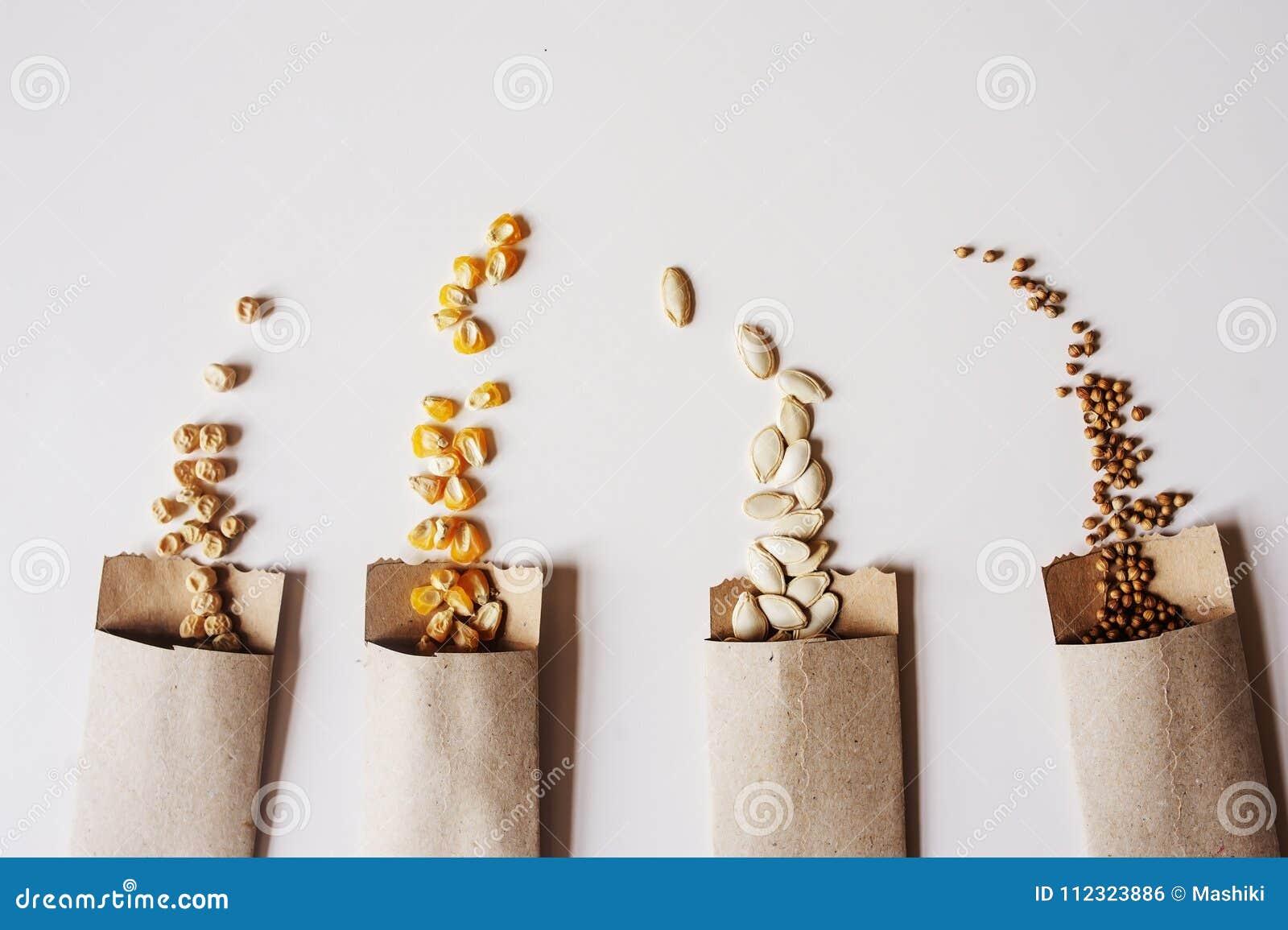 Sementes do vegetariano no envelope do papel do ofício