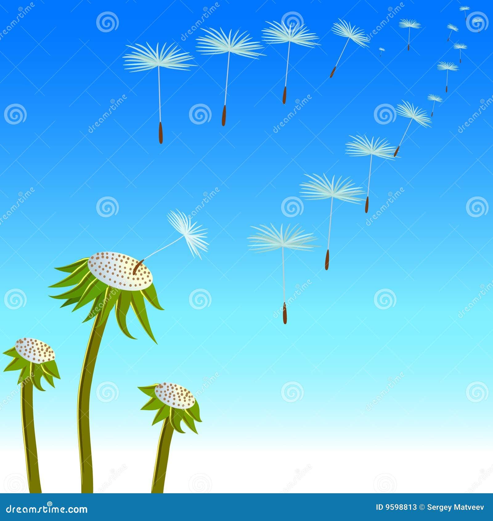 Sementes dos dentes-de-leão no vento