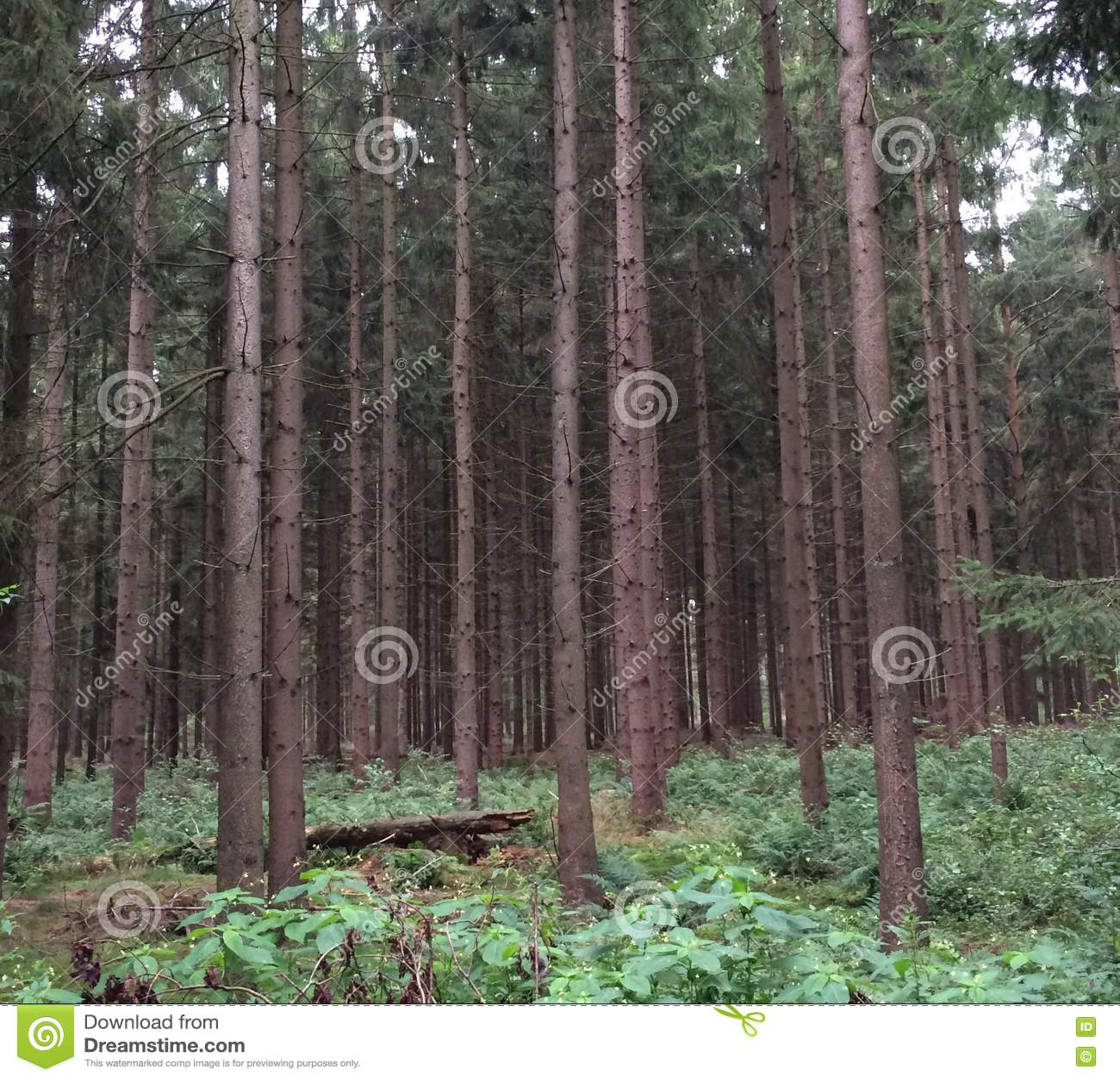 Semi раскройте лес