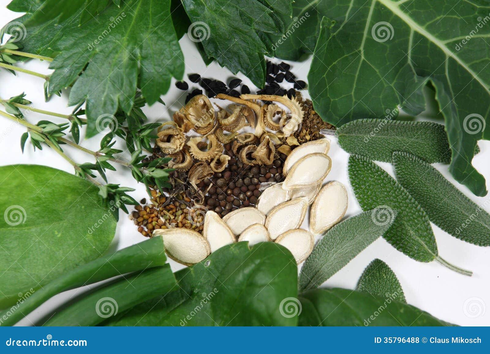 semi e piante dal giardino fotografia stock immagine di