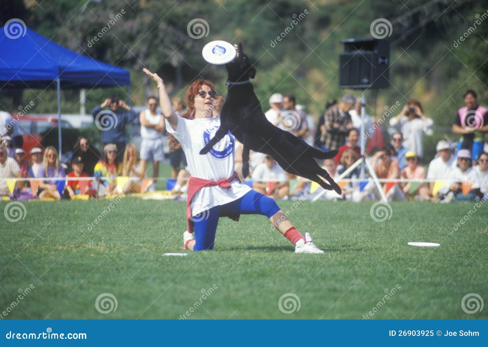 Semi-Finals собачьего состязания Frisbee