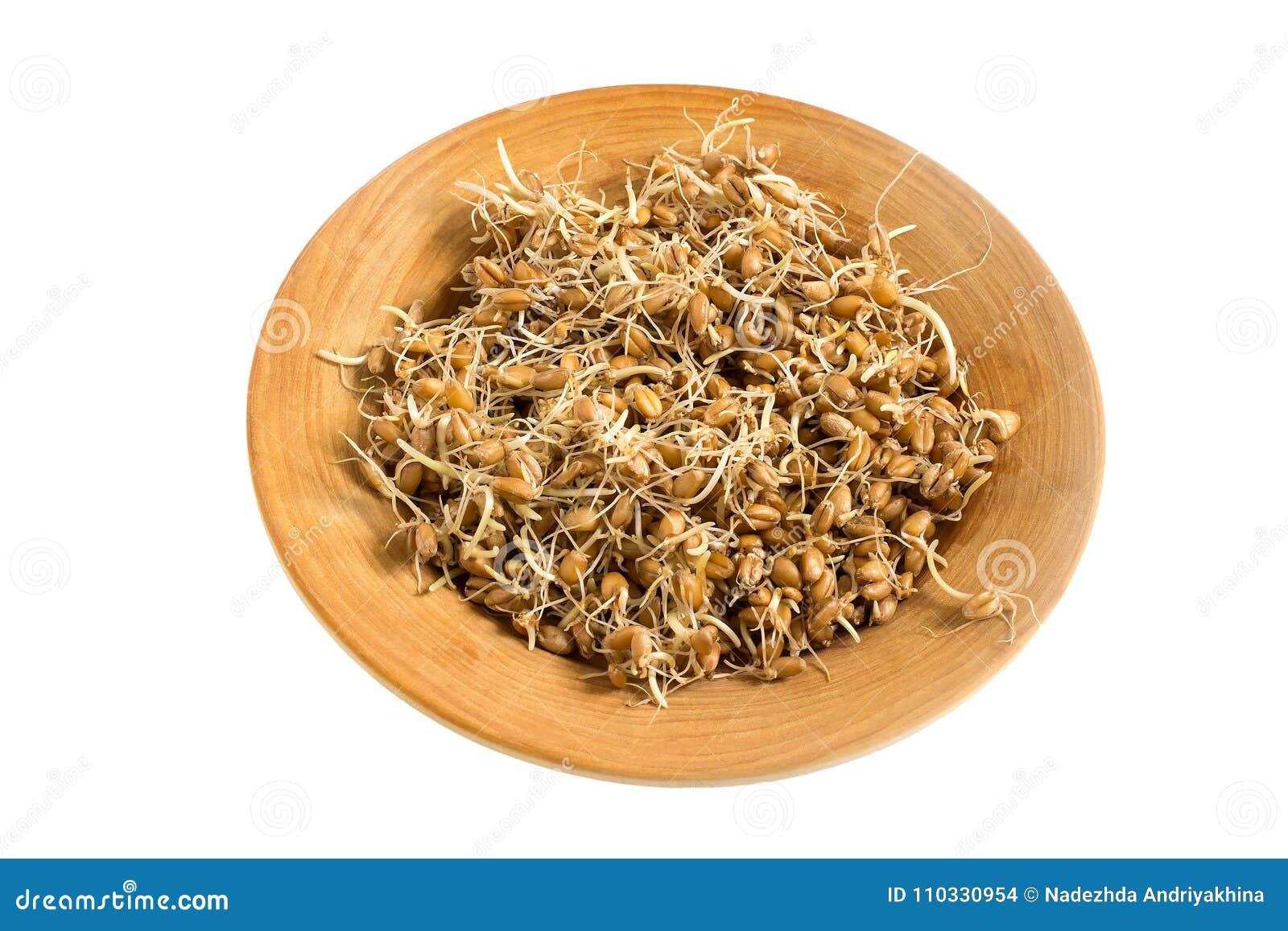 Semi germinati freschi del grano sul piatto su fondo bianco