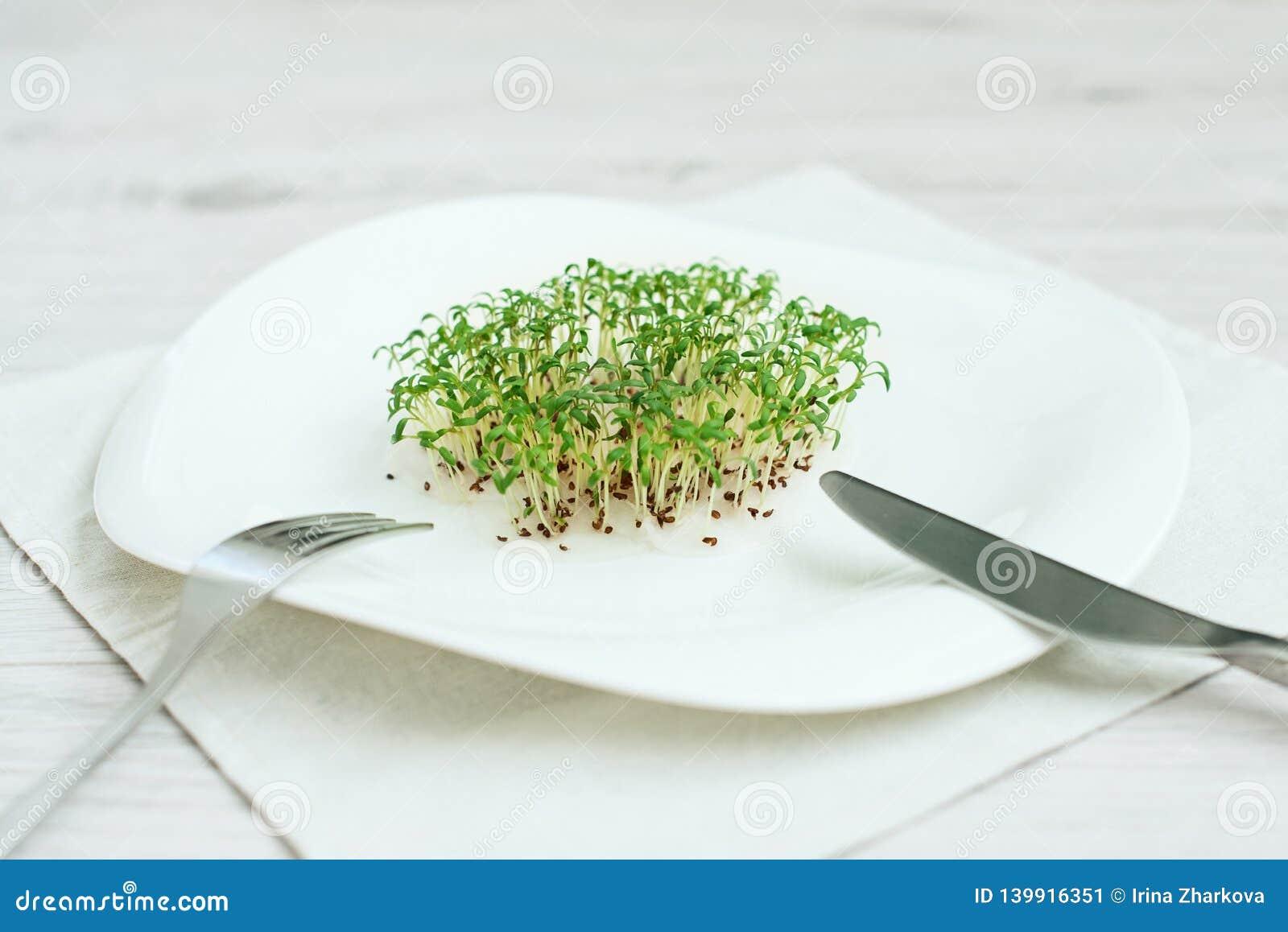 Semi germogliati lattuga del crescione del seme dei germogli verdi